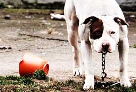cane-in-catena
