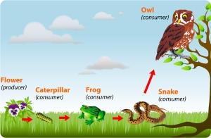 anfibi nella catena alimentare